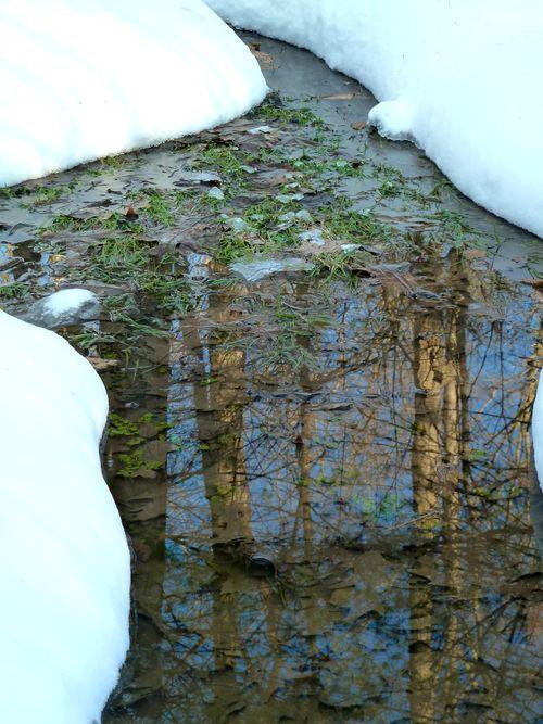Winterpuddle
